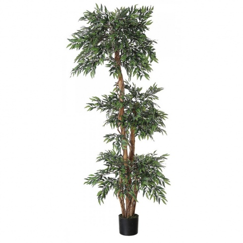 Tiered Ficus Tree