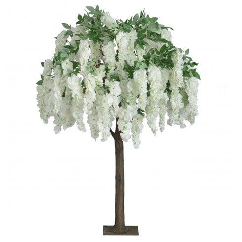 Trailing Cream Wisteria Tree