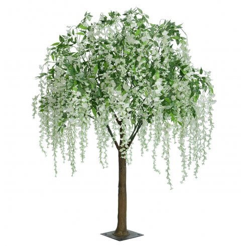 Weeping White Wisteria Tree