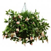 White Fuchsia Hanging Basket