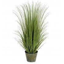 Wild Grass Plant