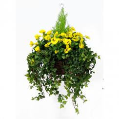 Yellow Pansy Hanging Basket