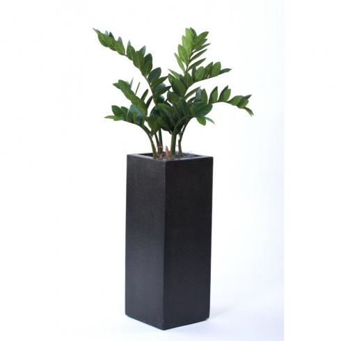 Zamifolia Plant set in Tall, Cube Planter